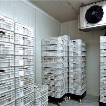 Forensic Storage